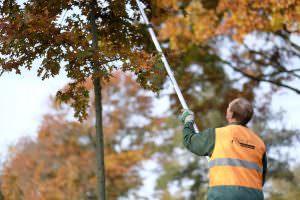 Foto medewerker wijkbeheer boom snoeien 2
