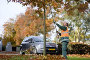 Foto medewerker wijkbeheer boom snoeien 3