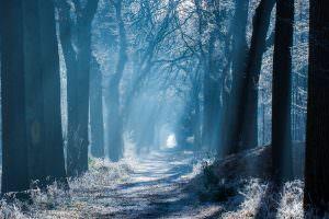 Winters bospad