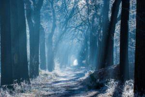 Winters bospad door Jouke Wijnstra