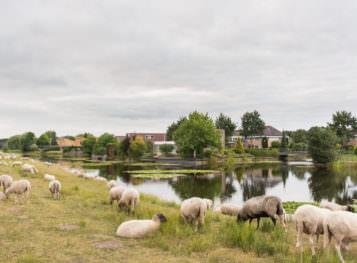 De Heide / Heidemeer / Heiderijck